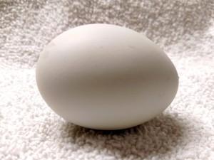 The last egg she laid
